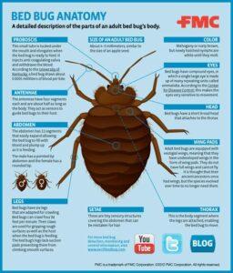 Bed Bug Sources Phoenix AZ