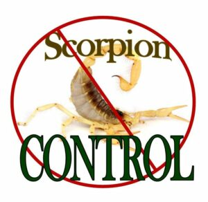 GIlbert Scorpion Pest Control
