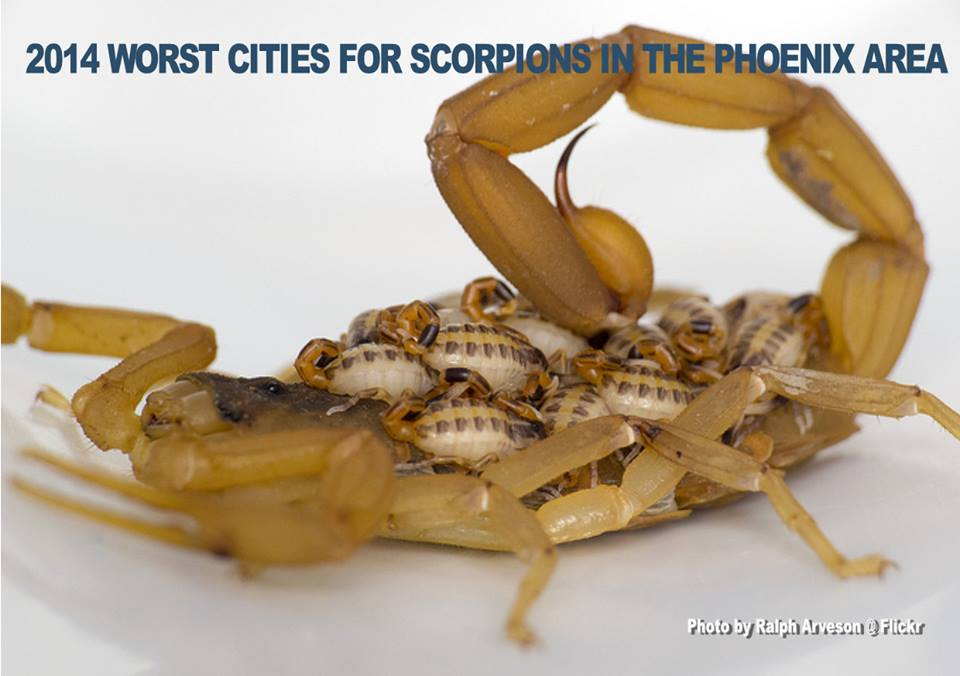 worst az scorpion cities