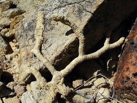 Landscape Termite Tubes Phoenix AZ