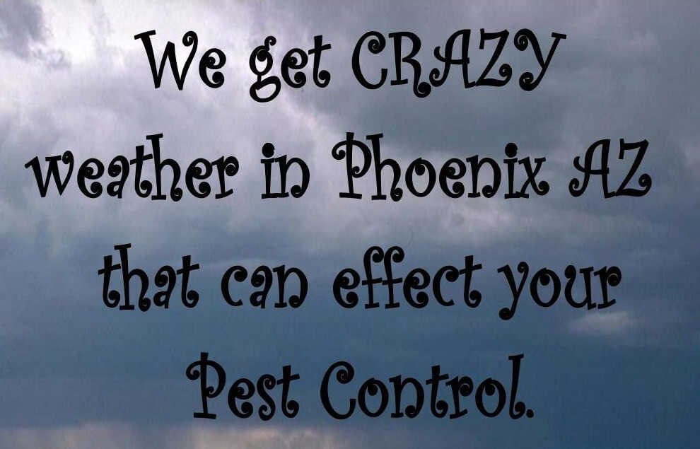 We often have CRAZY weather in the Phoenix AZ desert valley that effects your Pest Control.