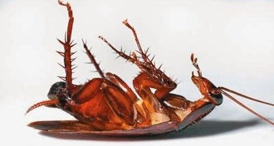 roaches phoenix az