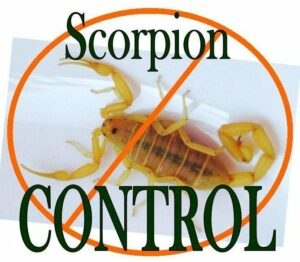 scorpion pest control