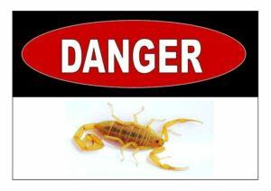 control scorpions Phoenix AZ