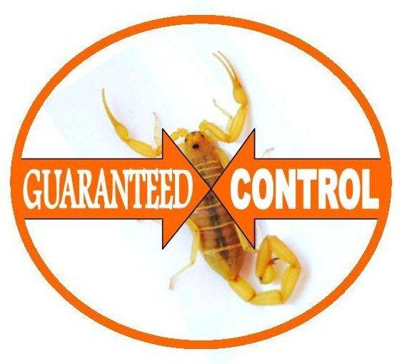 scorpion control