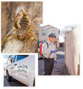 Responsible Pest Control Phoenix AZ